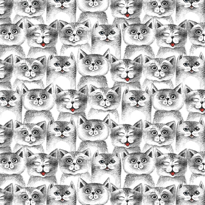 12914 - Cat 14-1000x1000