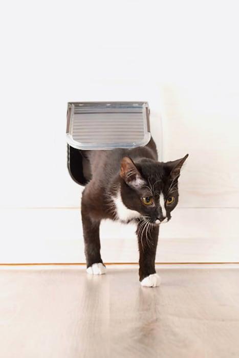 portinha-para-gatos
